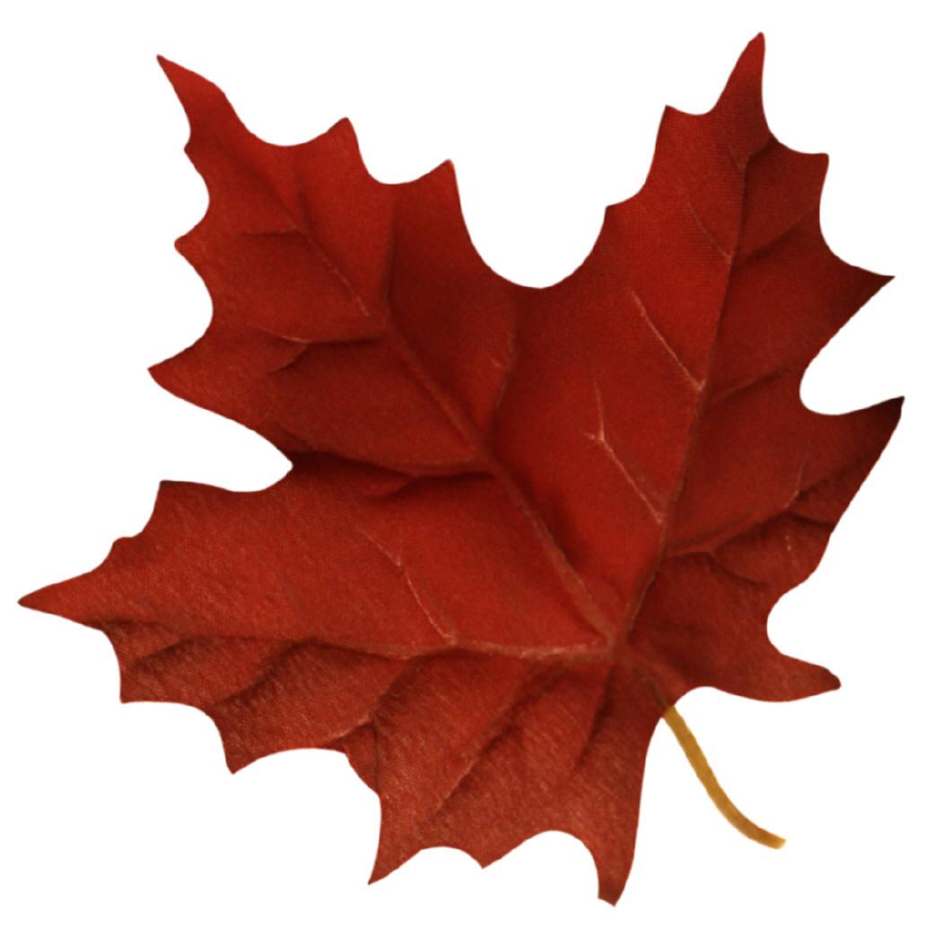 canada maple le... Free Clip Art Maple Leaf