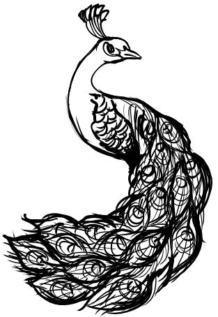 Peacock body outline - photo#26