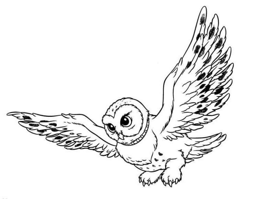 Gambar Burung Hantu ClipArt Best Rizal Mugni Herbal