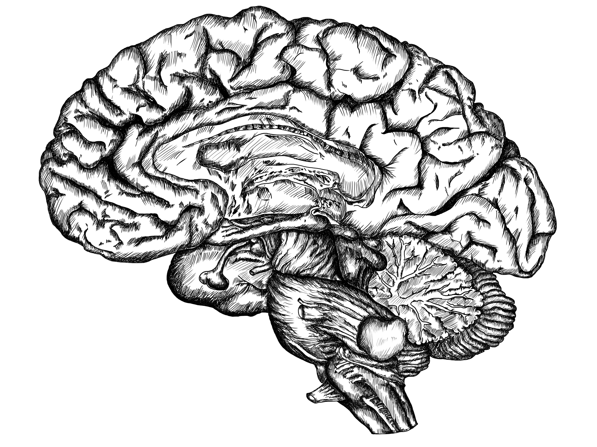 black and white brain diagram pictures to pin on pinterest