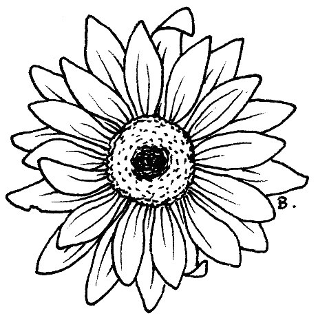 Sunflower leaf template clipart best for Coloring pages of sunflowers