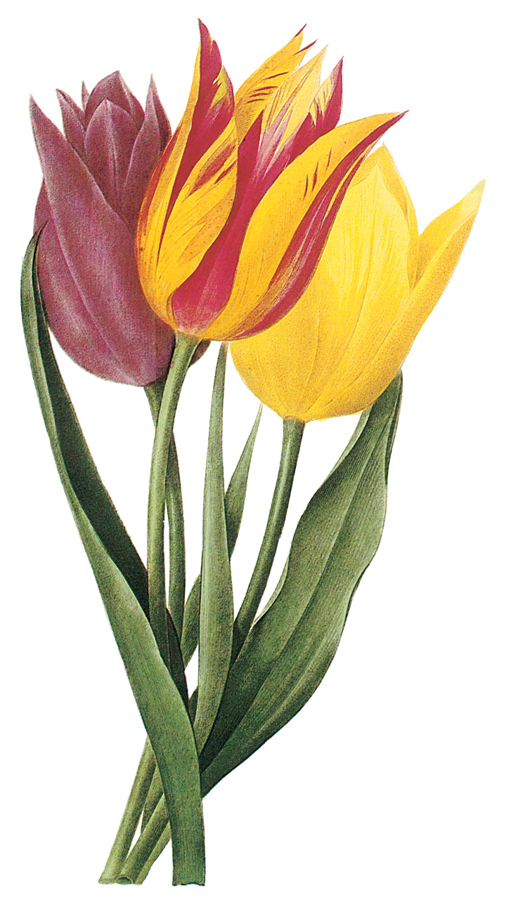 Spring Borders Clip Art Free - ClipArt BestTulips Page Borders Clipart Free