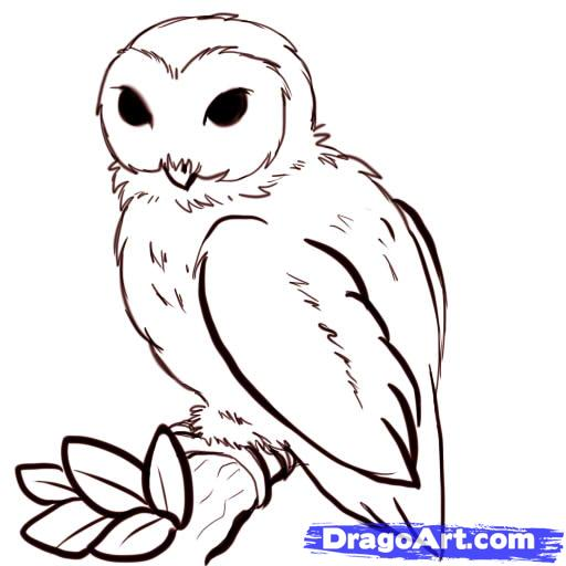 cartoon drawn owl clipart best