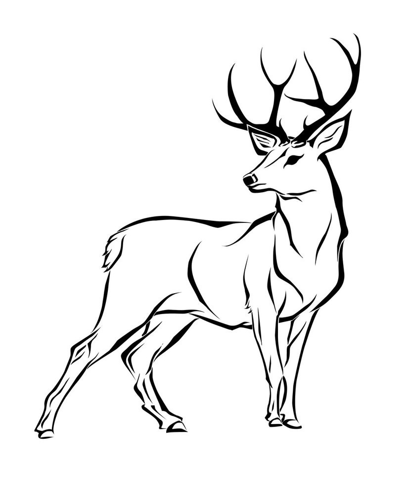 deer drawings clipart best
