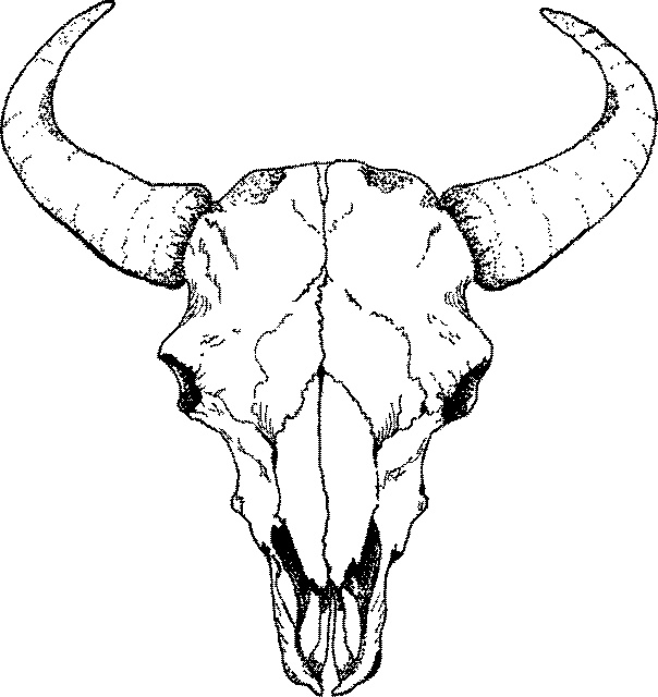 Skull Line Drawing Tattoo : Cow skull drawing clipart best