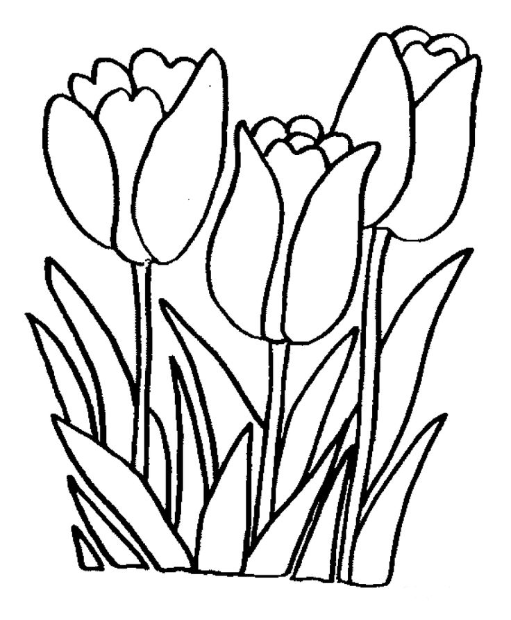 Line Drawing Tulip : Tulip line drawing clipart best
