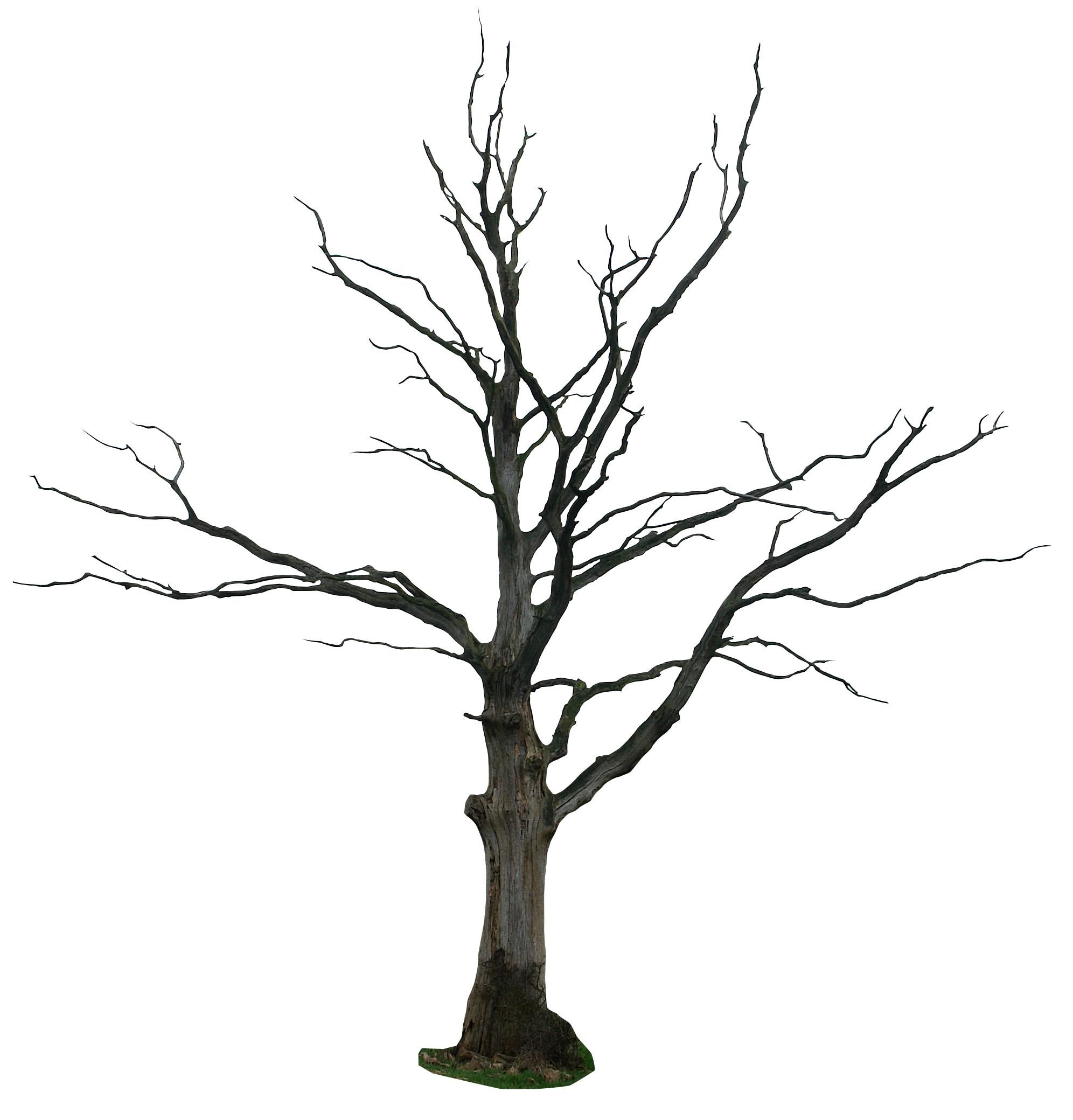 clip art dying tree - photo #16