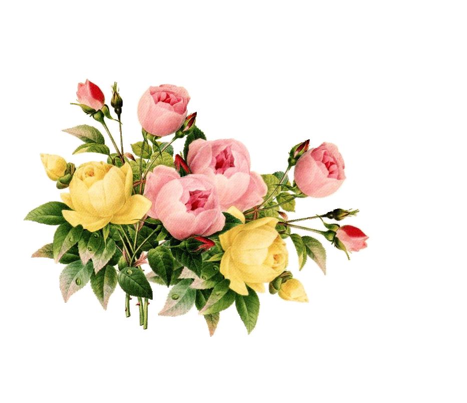 Vintage Flower Frame Vector Png On Picterest