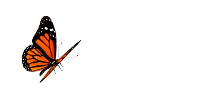 Animation Picture Of Butterfly Free Download - ClipArt Best