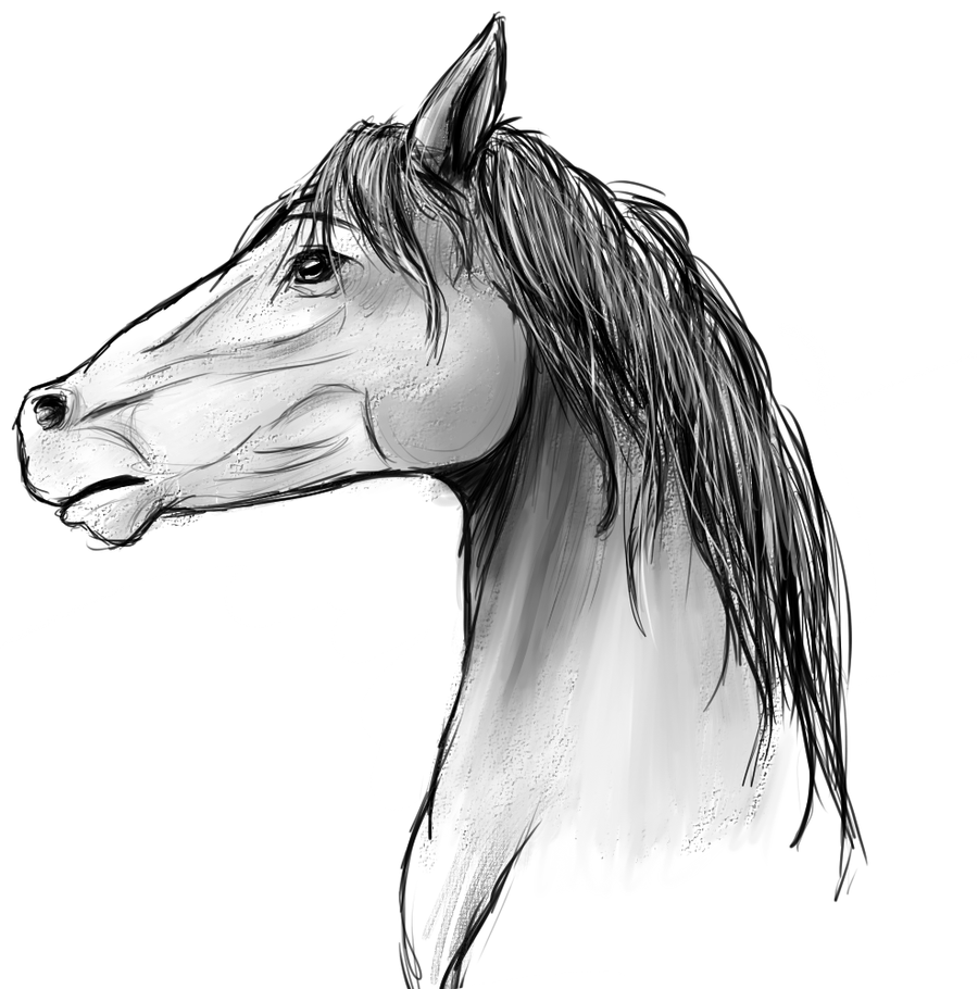 Horse Face Line Drawing : Horse face profile drawing
