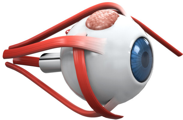 Fill In The Blank Eye Diagram - ClipArt Best - ClipArt ...