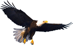 Free Clip Art Bald Eagle