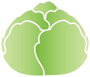 Lettuce Clipart Image - Simple, attractive drawing of a ...