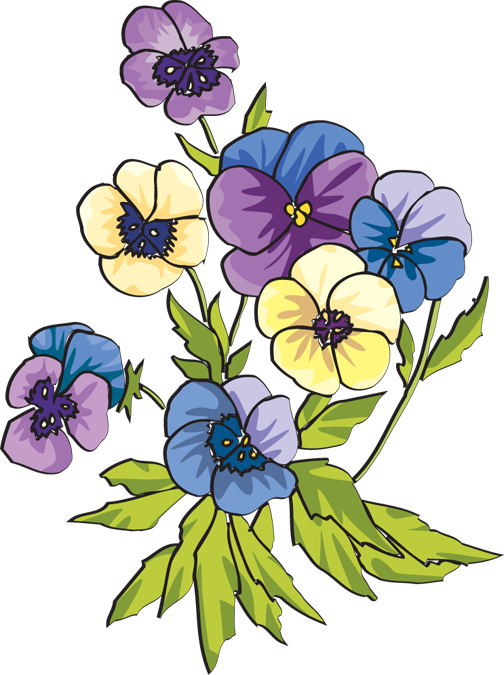 pansy flower drawing - photo #31