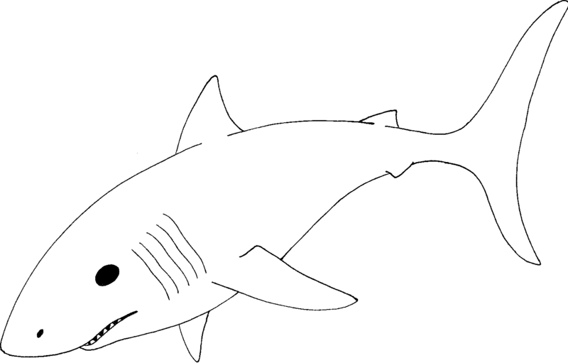 bull shark coloring pages - sheet the bull shark coloring pages