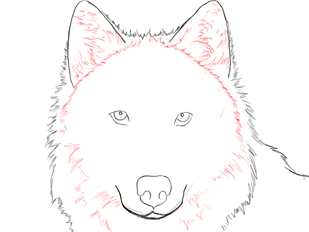 Anime Wolf Drawing at GetDrawingscom  Free for personal