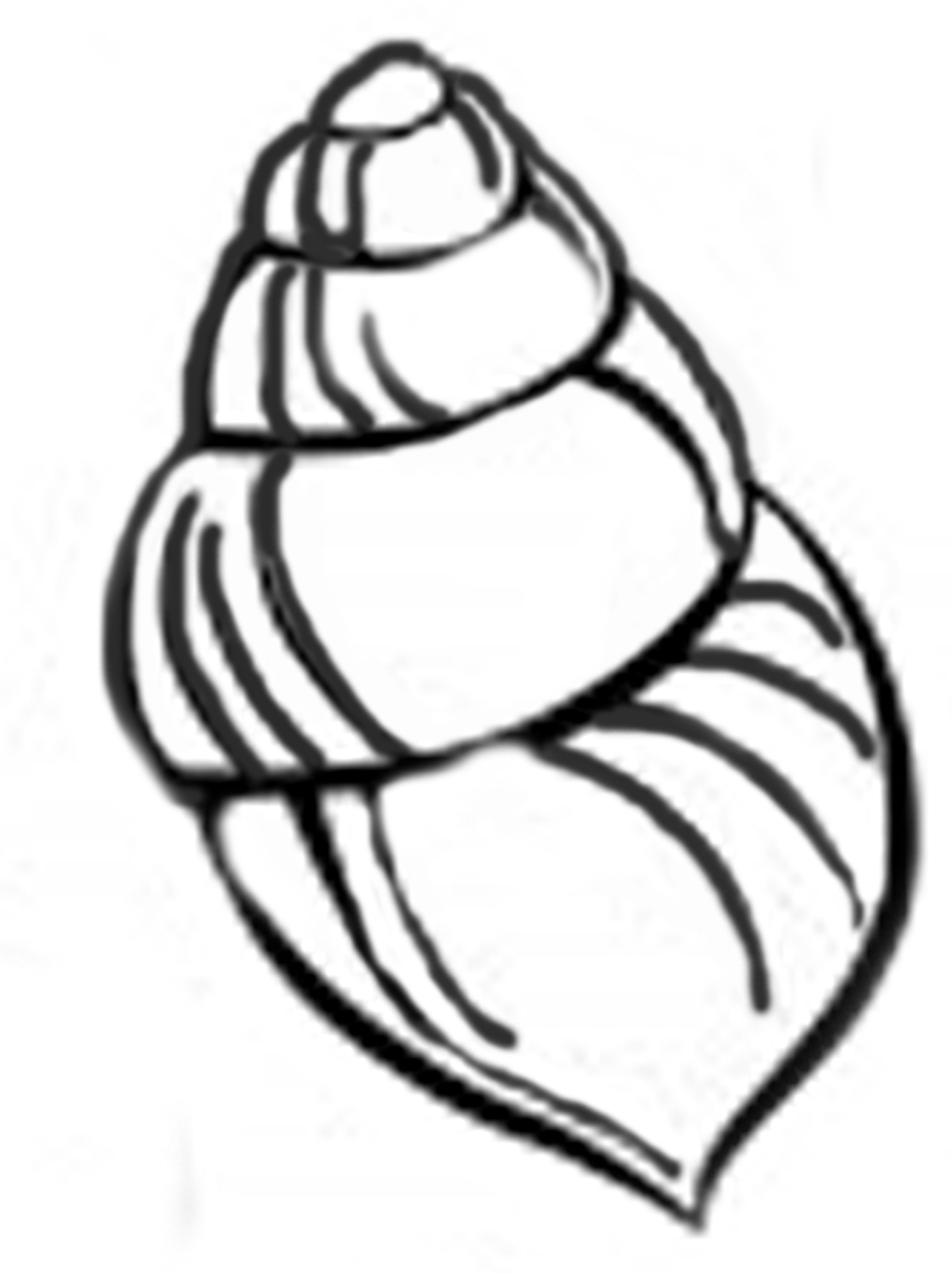 This is a picture of Eloquent Free Printable Seashell Stencils