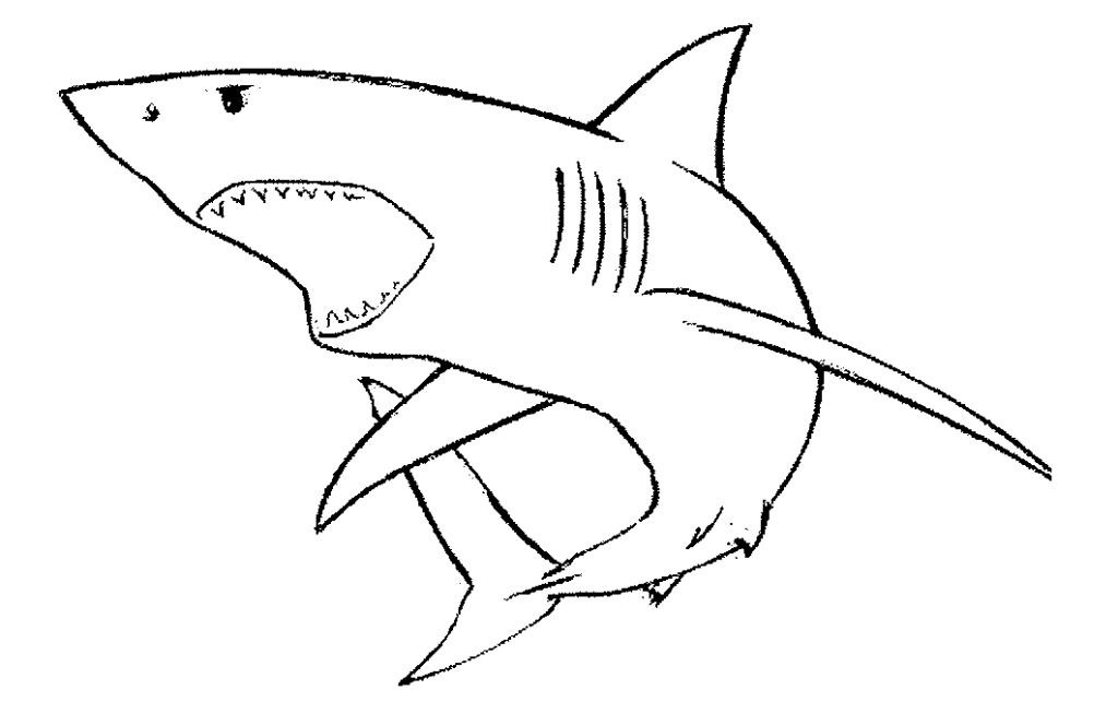 Line Drawing Shark : Sharks drawings clipart best