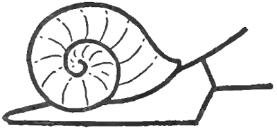 How to draw snails with simple step by step drawing for Simple snail drawing