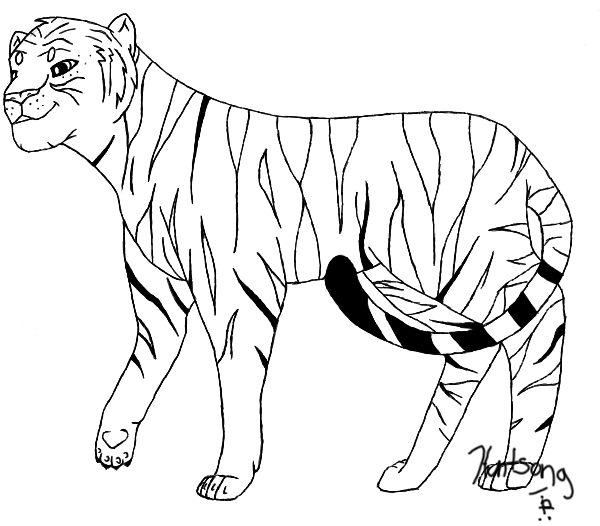 Line Art Tiger : Pictures of drawings animals clipart best