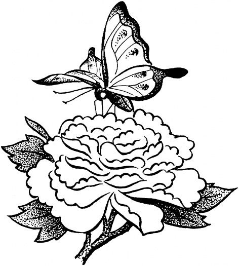 Butterfly On Flower Drawing Clipart Best