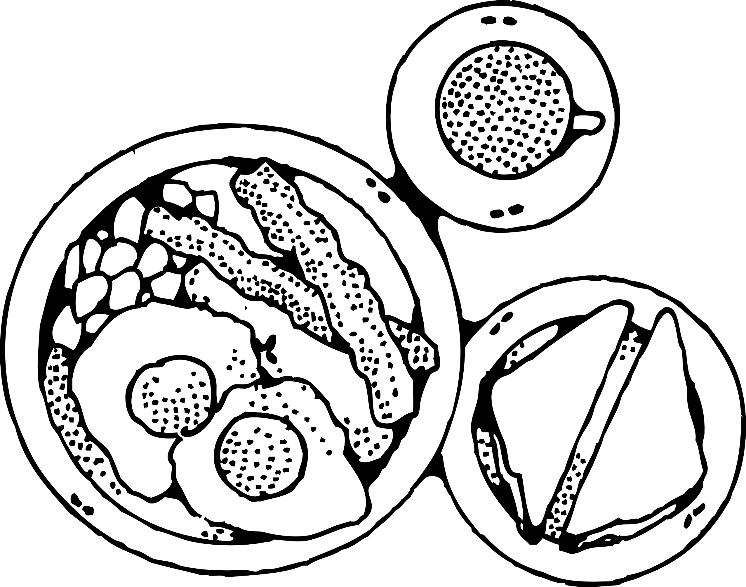 Line Drawing Egg : Line drawing egg half fry clipart best