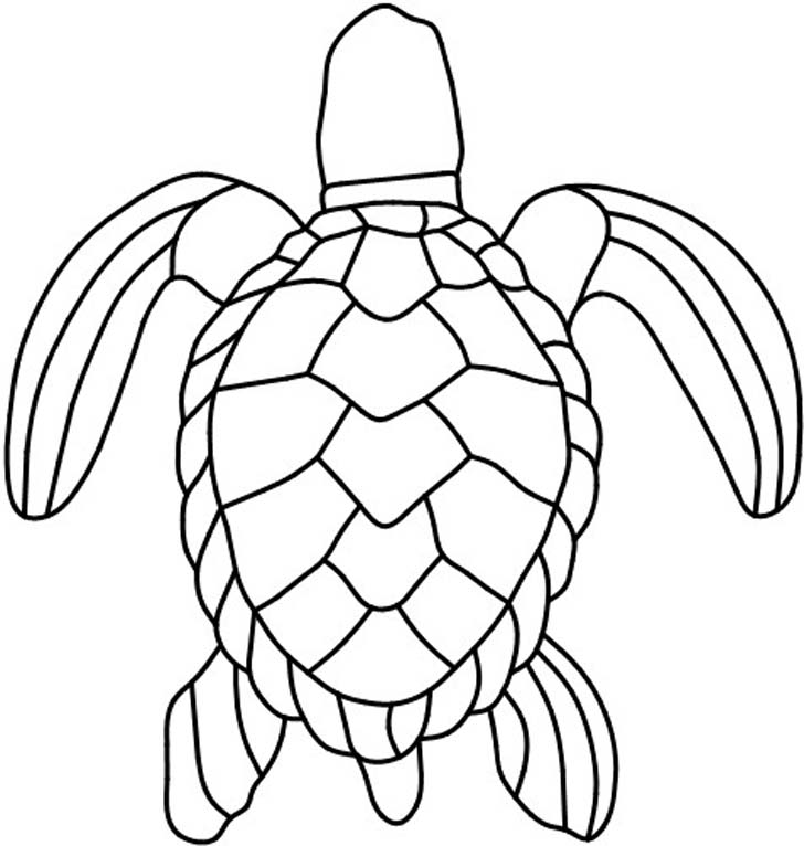 how to draw a sea turtle shell