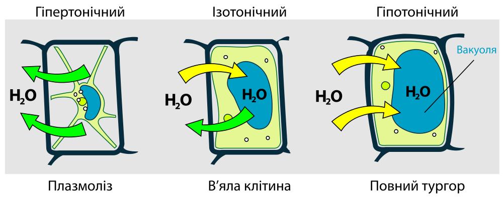 osmosis plasmolysis hemolysis