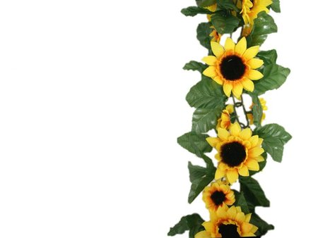 Sunflower Border Clipart Best