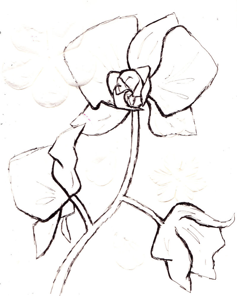 Orchid Drawing Outline