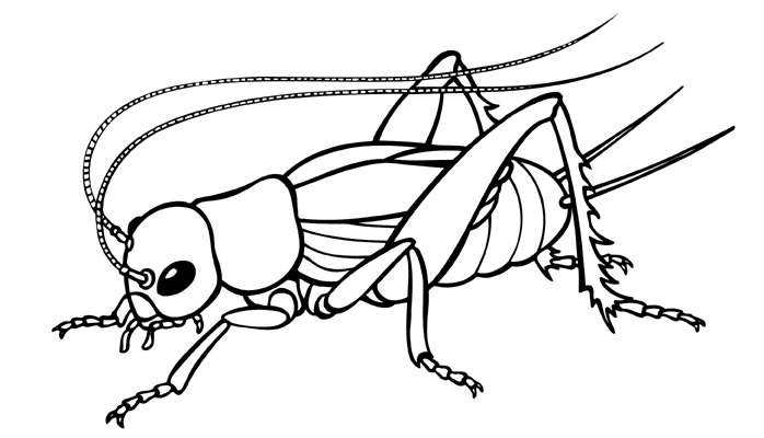 Line Drawing Insects : Clip art insects clipart best