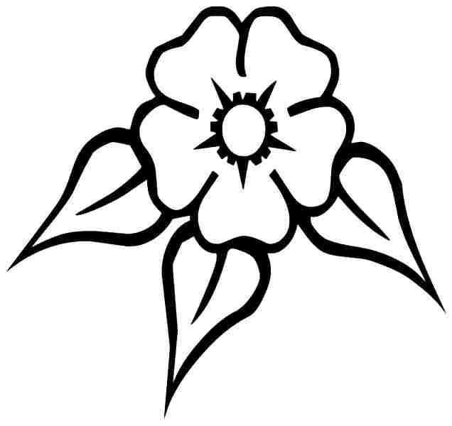 Buttercup line drawing clipart best for Buttercup flower coloring pages