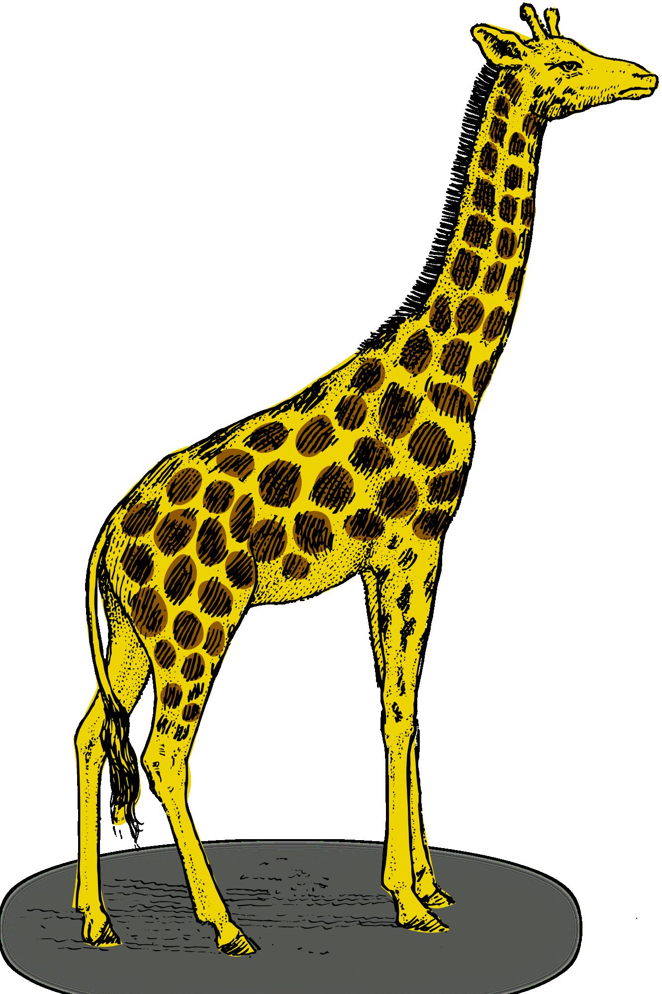 Line Drawing Giraffe : Giraffe line drawing clipart best