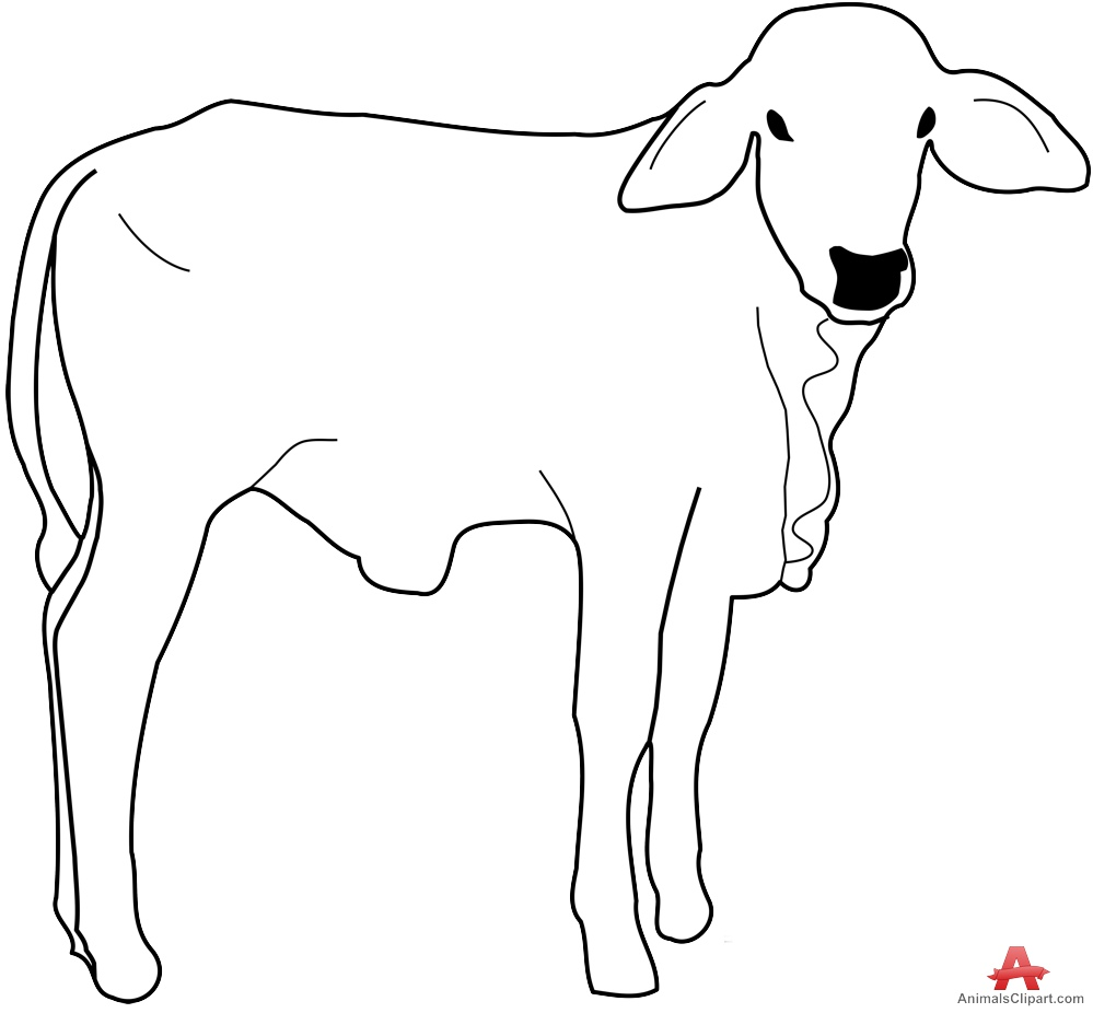 Line Drawing Cow Face : Outline drawing clipart best