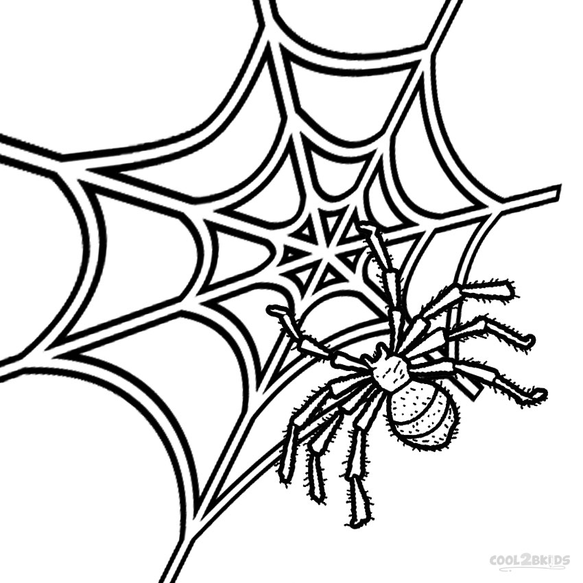 Spider Web Drawing Clipart Best