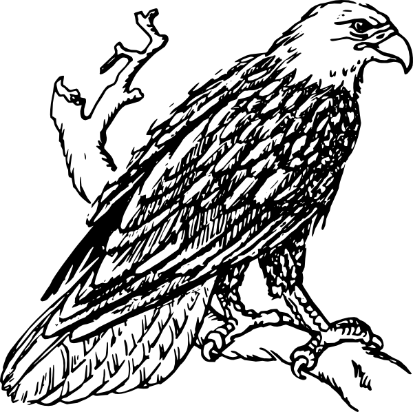 Drawings Of Eagles - ClipArt Best