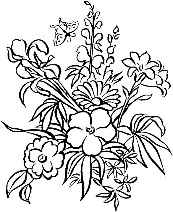 tropical rainforest printable coloring pages