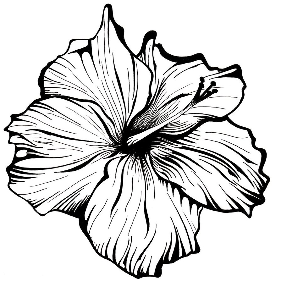 Black Line Flower Drawing : Flower line drawing clipart best