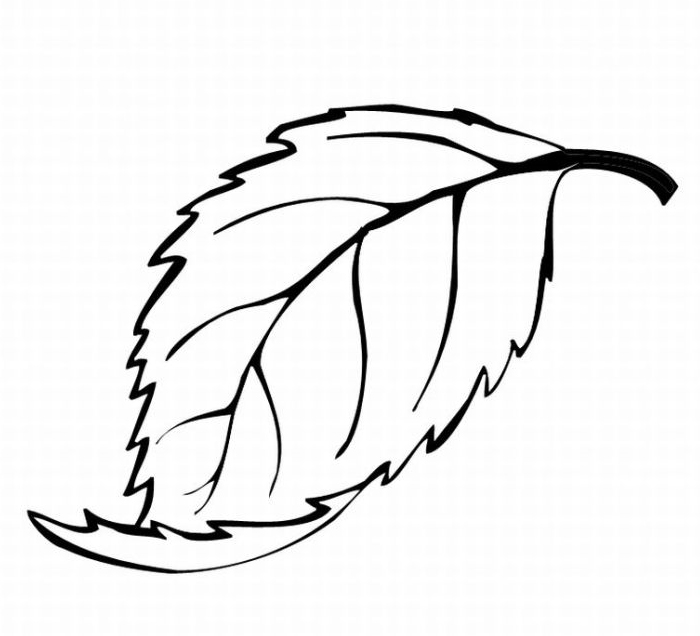 leaf Colouring Pages