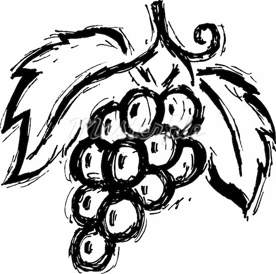 Line Drawing Grapes : Line drawing of grapes clipart best
