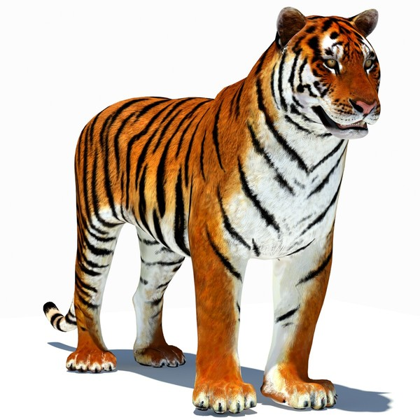Animated Tiger Pictures - ClipArt Best