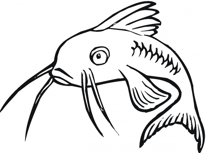 Catfish coloring pictures | Super Coloring