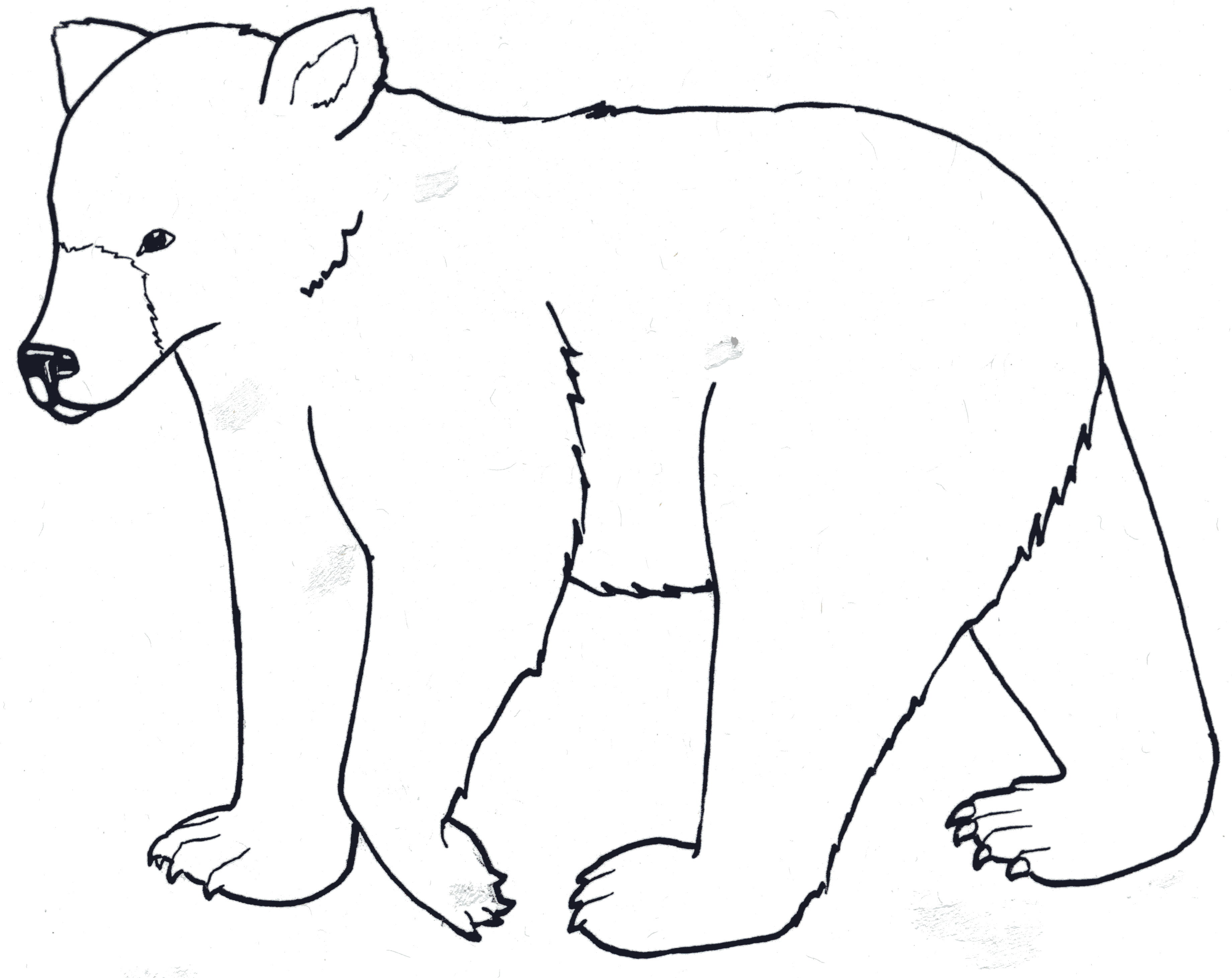 how to draw a standing bear