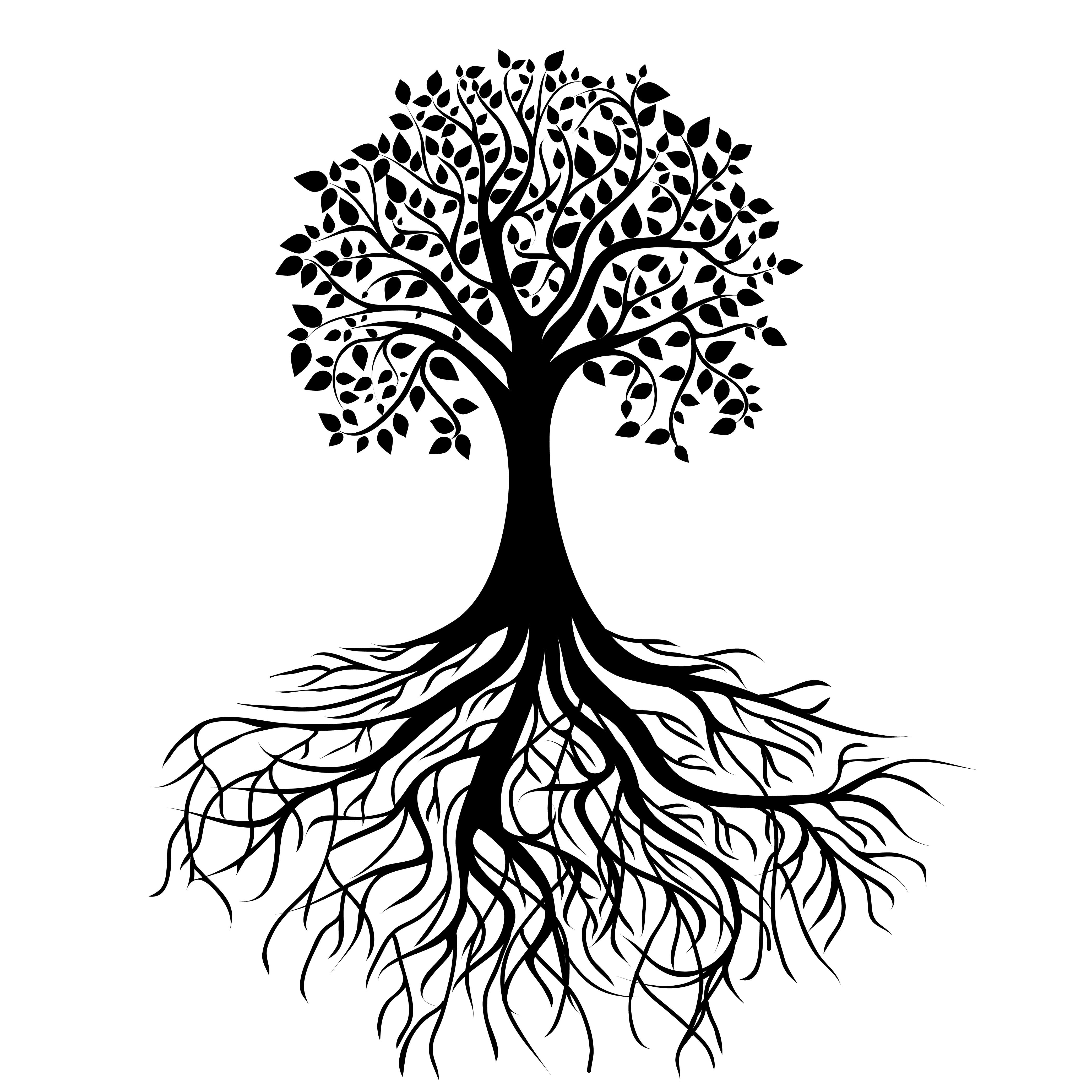 Line Art Of Tree : Oak tree line drawing clipart best