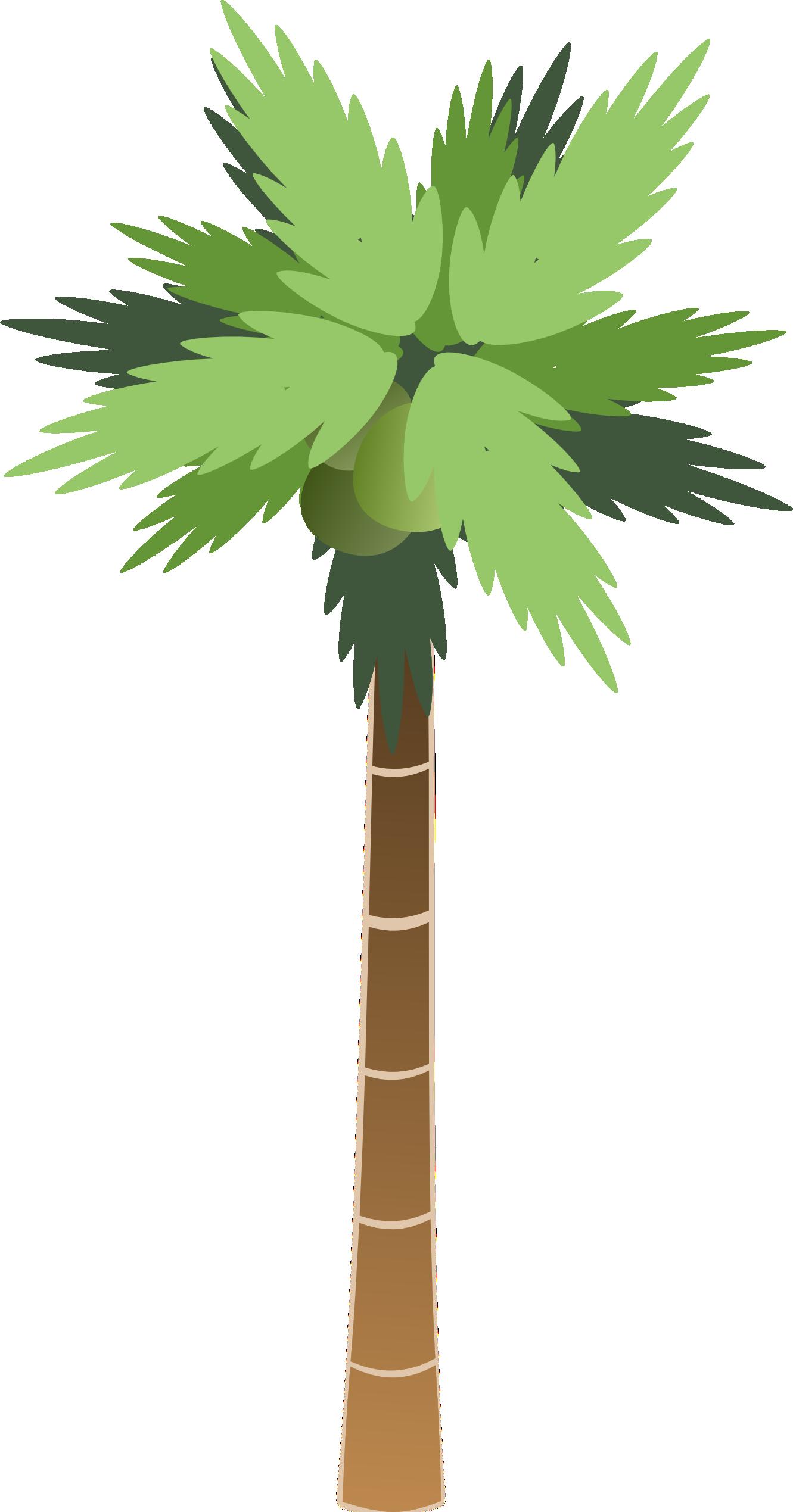 Palm Trees Cartoon Images Cartoon Palm Tree Palm Tree