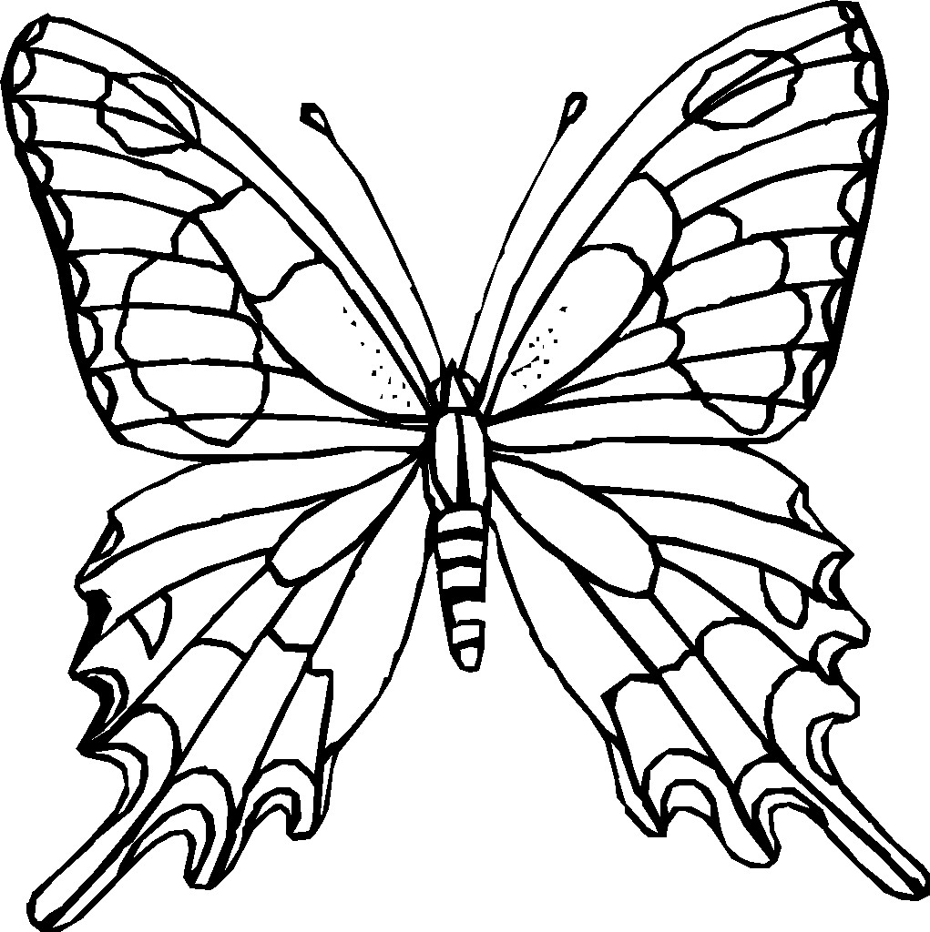 Cute butterfly drawings clipart best for Cute butterfly coloring pages