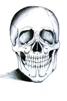 how to draw a realistic skull step by step