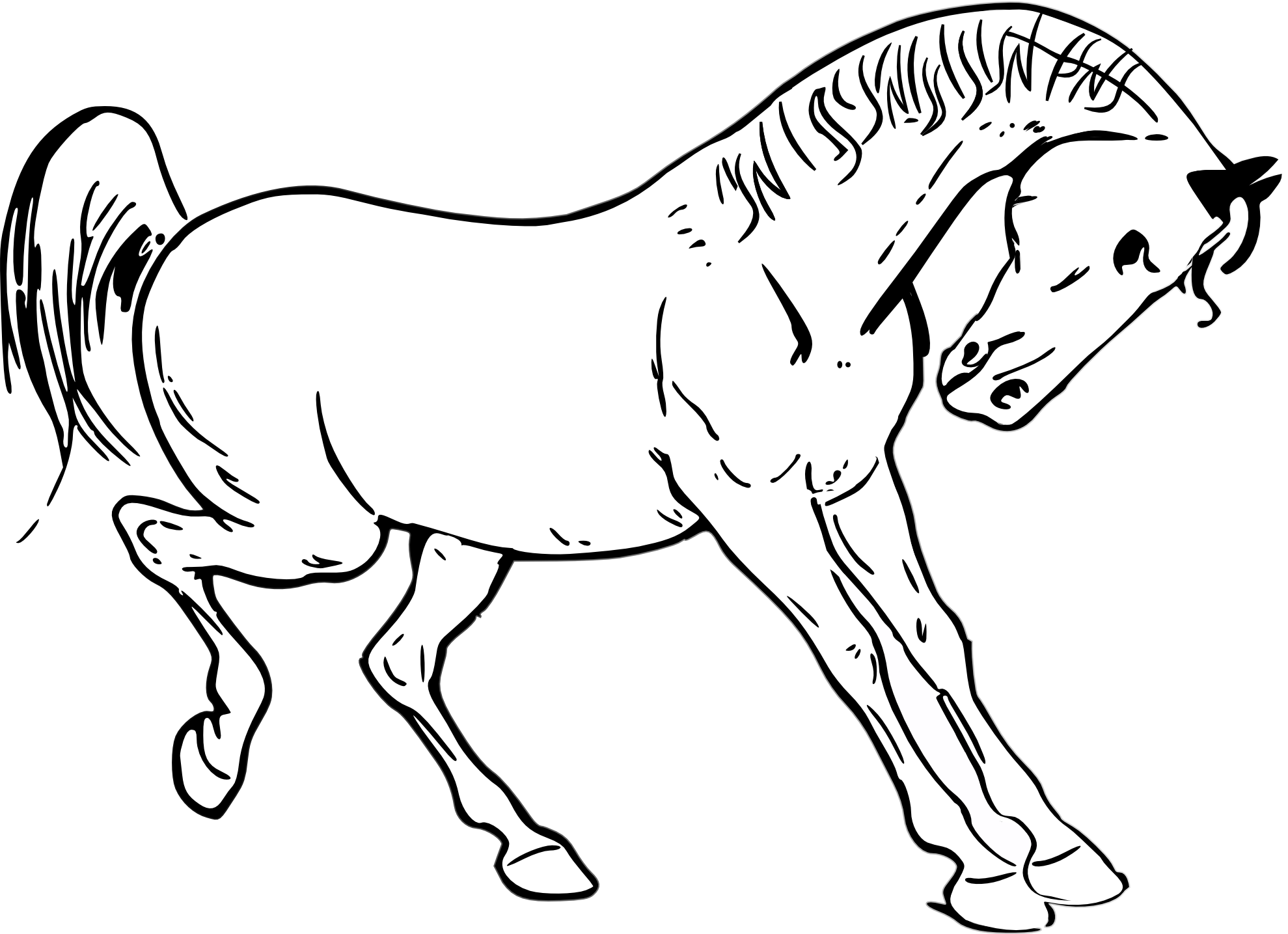 Horse Pictures Black And White Drawing Horse Outline Black White