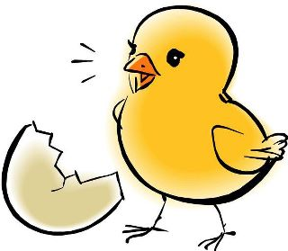 Picture Of Baby Chick - ClipArt Best
