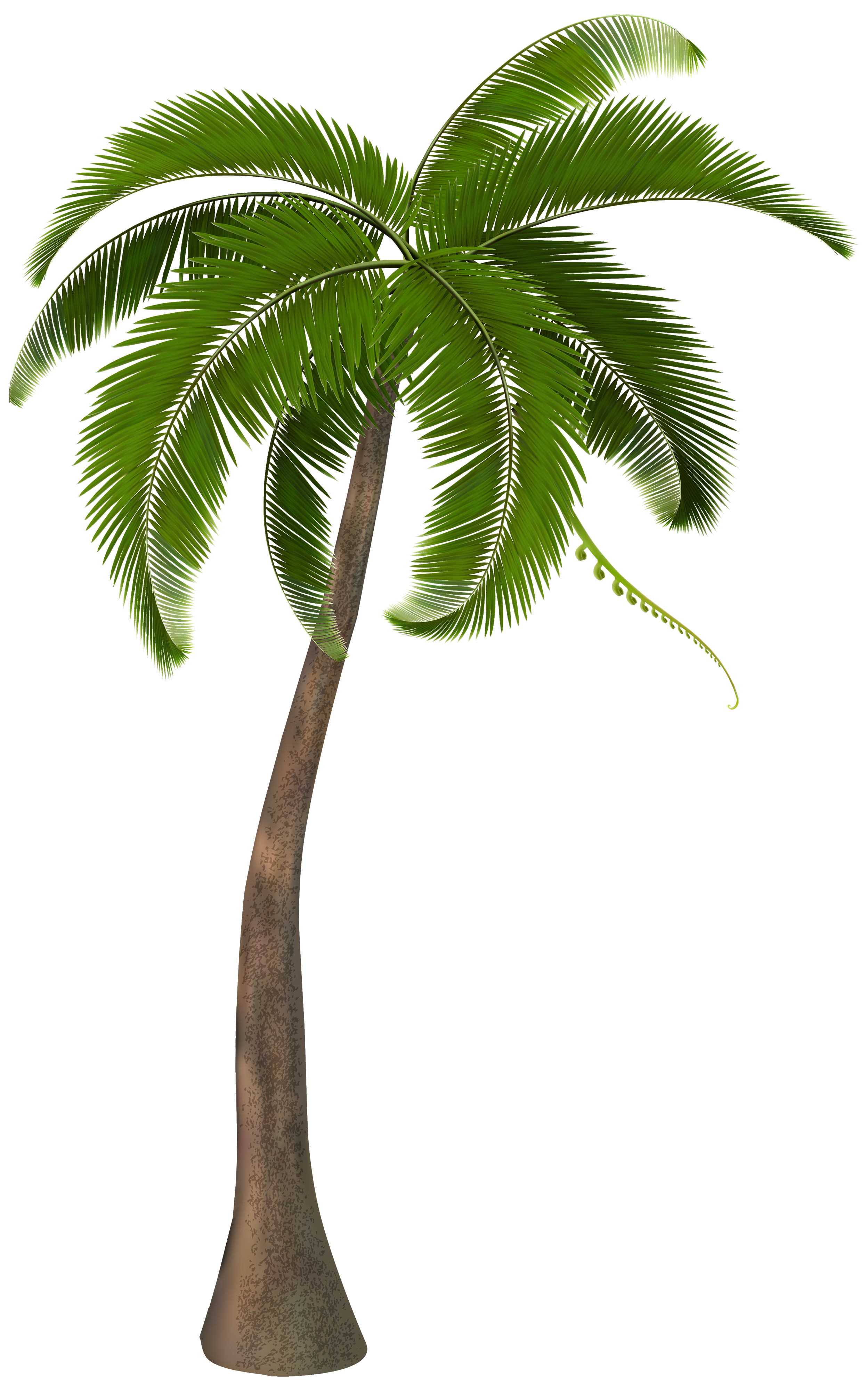 Palm Tree Png - ClipArt Best